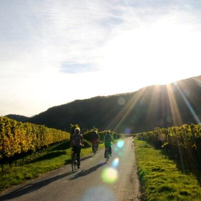 Mit dem Fahrrad auf dem Moselradweg.